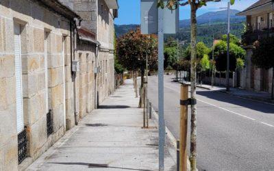 Subvención para a reposición de árbores en beirarrúas